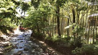 竹林の写真・画像素材[2277543]