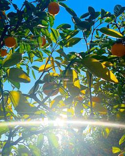 黄色い花の束の写真・画像素材[2278017]