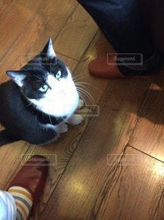 猫の写真・画像素材[102380]