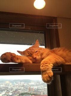 猫の写真・画像素材[102384]
