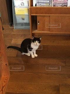 猫の写真・画像素材[102385]