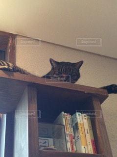 猫三昧の写真・画像素材[102387]
