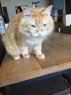 猫三昧の写真・画像素材[102390]