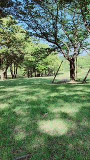草原の木の写真・画像素材[2279053]