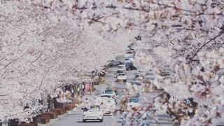 桜並木の写真・画像素材[2280112]