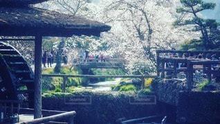 桜の写真・画像素材[2281289]