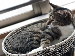 かご猫の写真・画像素材[3710180]