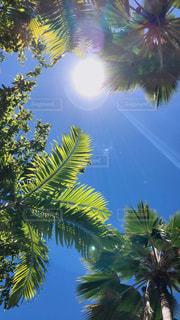 南国の木と日差しの写真・画像素材[2283230]