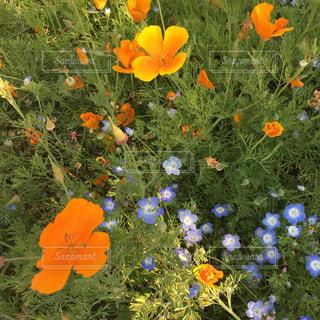 秋の花の写真・画像素材[2667701]