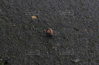 地面に蝸牛の写真・画像素材[3484169]