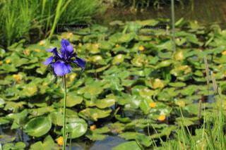 植物の中の紫の花の写真・画像素材[4385035]