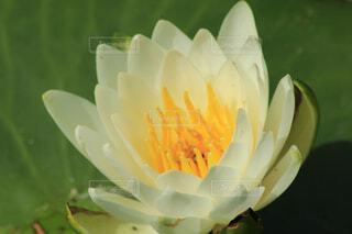 花のクローズアップの写真・画像素材[4385551]