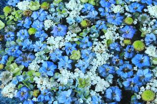 青い花のクローズアップの写真・画像素材[4557645]