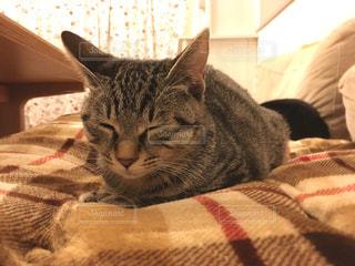 ウトウトしてる猫の写真・画像素材[2769375]