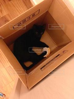 ダンボールに入っている黒猫の写真・画像素材[2776058]