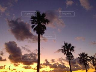 夕焼けとヤシの木の写真・画像素材[2776184]
