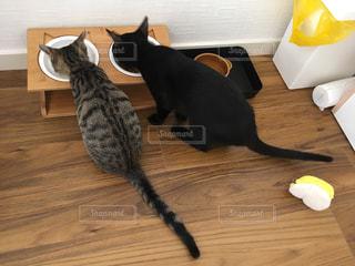 並んでごはんを食べる猫の写真・画像素材[2776821]