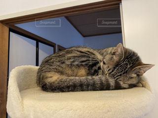 眠る猫の写真・画像素材[3104920]