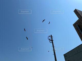 空を飛ぶトンビの写真・画像素材[3145279]