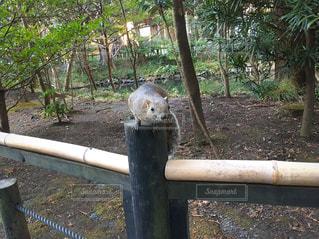 台湾リスの写真・画像素材[3274603]