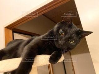 黒猫の写真・画像素材[3583149]