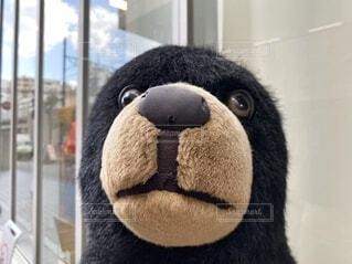 クマのぬいぐるみの写真・画像素材[3847798]