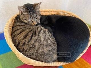 ベッドでくっついて眠る二匹のネコの写真・画像素材[4062675]