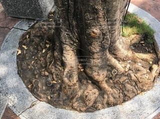 舗装に圧迫されている樹木の写真・画像素材[4087788]