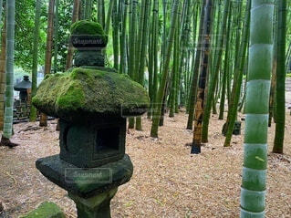 報国寺の竹林の写真・画像素材[4100350]