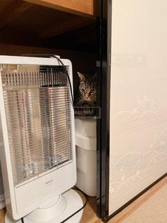 押入れに隠れて遊ぶ猫の写真・画像素材[4427753]