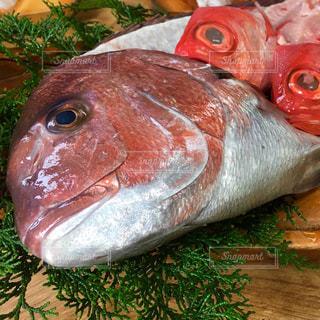 魚のクローズアップの写真・画像素材[2284634]