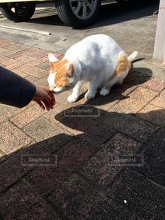 猫の写真・画像素材[2368839]