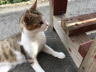 猫の写真・画像素材[2407611]
