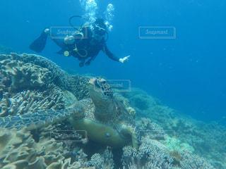 セブ島ダイビングの写真・画像素材[2286777]