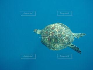 水の下を泳ぐカメの写真・画像素材[2286865]
