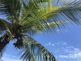ヤシの木のあるビーチの写真・画像素材[2286866]