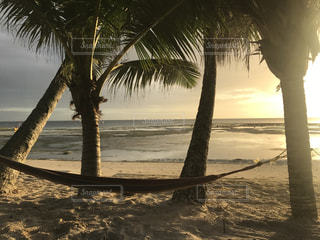 水の体の前にヤシの木があるビーチの写真・画像素材[2287012]