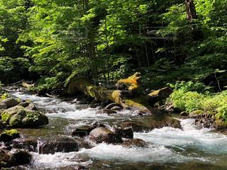 森の妖怪の写真・画像素材[2289522]