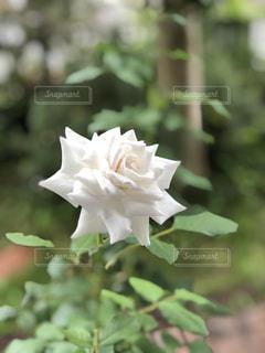 花のクローズアップの写真・画像素材[2309110]