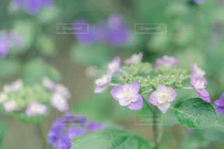 花のクローズアップの写真・画像素材[2291024]