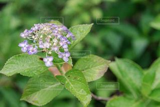 花のクローズアップの写真・画像素材[2291047]
