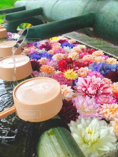 花のクローズアップの写真・画像素材[2308583]