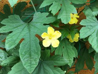 植物のクローズアップの写真・画像素材[2292832]