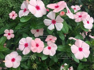 花のクローズアップの写真・画像素材[2294967]