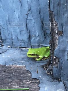 建物のかげに座っているカエルの写真・画像素材[2299075]