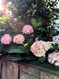 自然の写真・画像素材[89428]