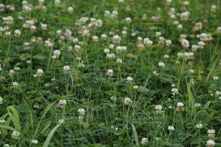 花畑のクローズアップの写真・画像素材[2337269]