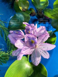花のクローズアップの写真・画像素材[2497880]