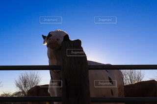 牛の写真・画像素材[2302140]