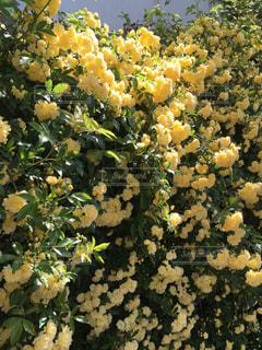 花のクローズアップの写真・画像素材[2299372]